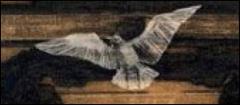 geert de kockere,kaatje vermeire,littérature jeunesse,éditions rouergue,flandre,belgique,traduction